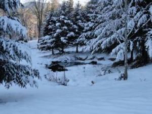 snow photos of pond 1